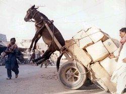 Donkey2_1