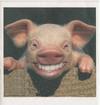 Smilepig