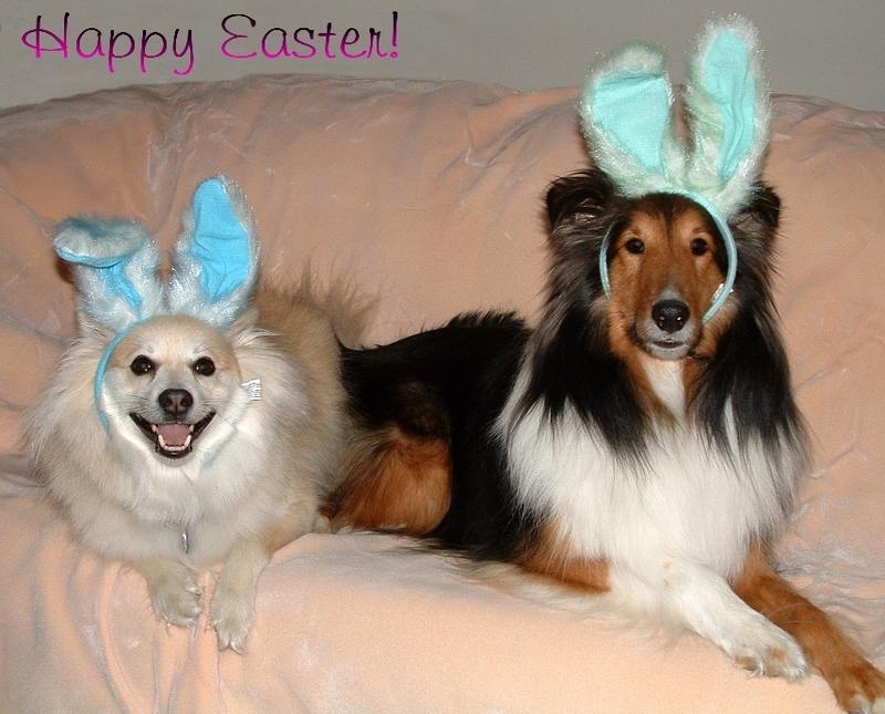 Easterbeagle_3